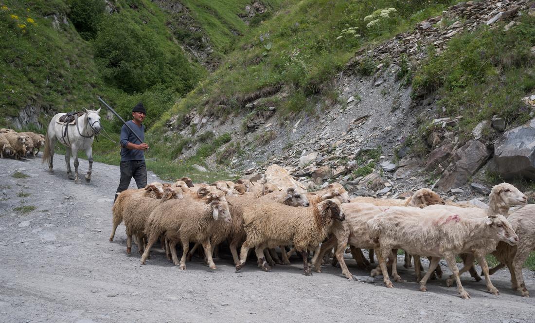 Shepherd in Truso