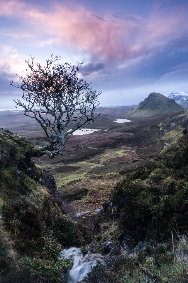 Lone tree, Quiraing, with stream, Isle of Skye