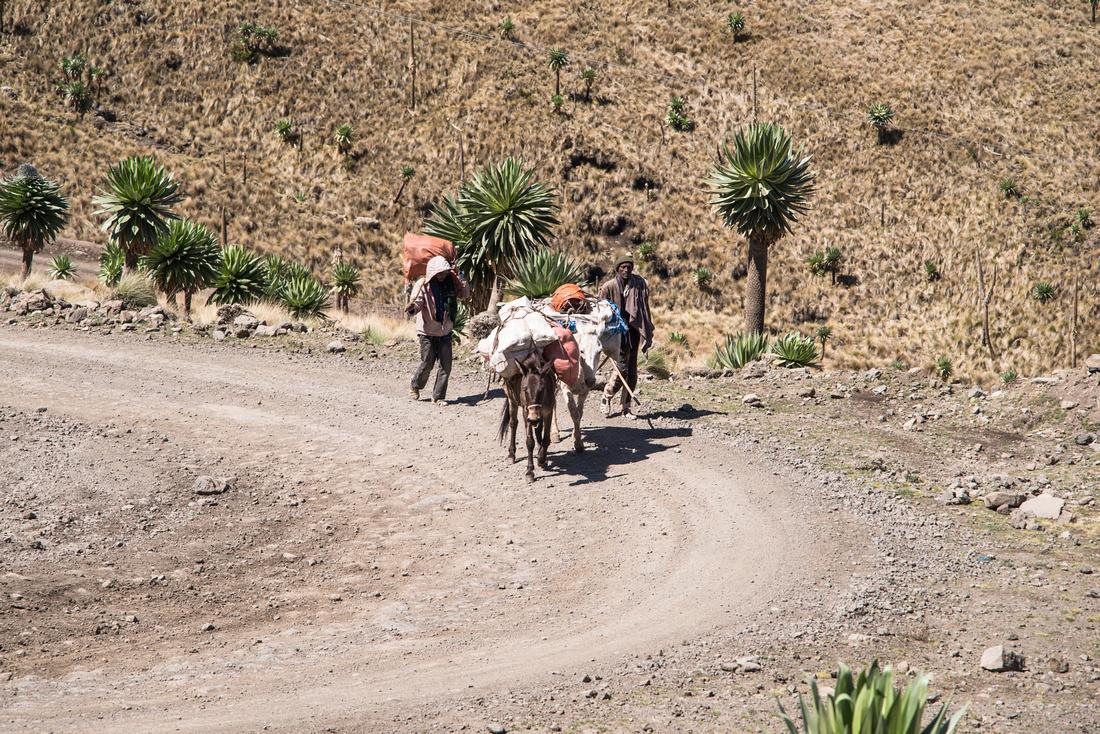 Muleteers, Simien Mountains National Park, Ethiopia