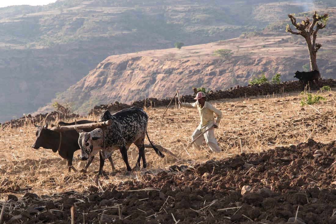 Ploughing with oxen, Mekarebya