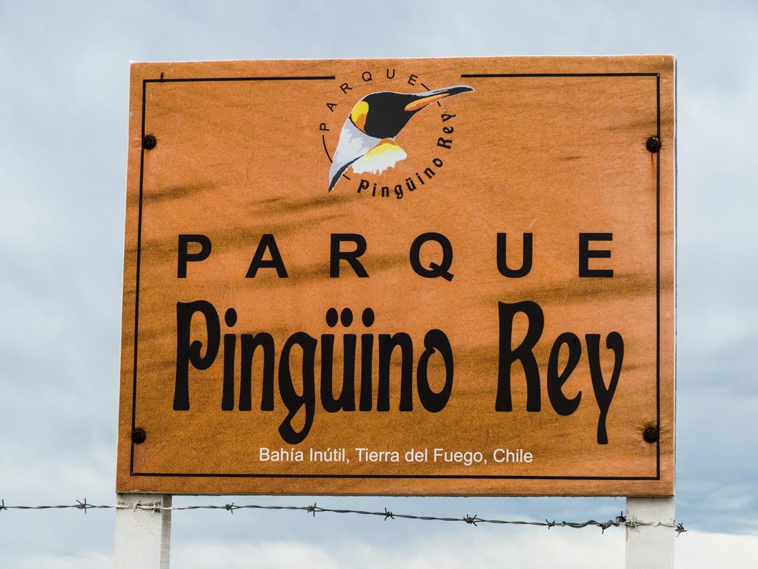 Parque Pingüino Rey, Tierra del Fuego, Chile