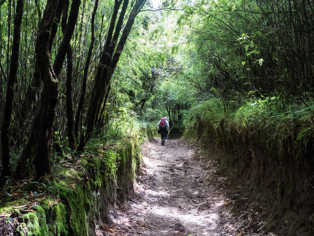 Walking through bamboo grove en route to Gorkey