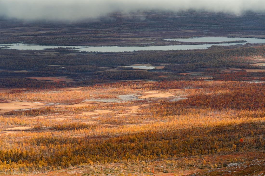 Autumn colours in Arctic Sweden