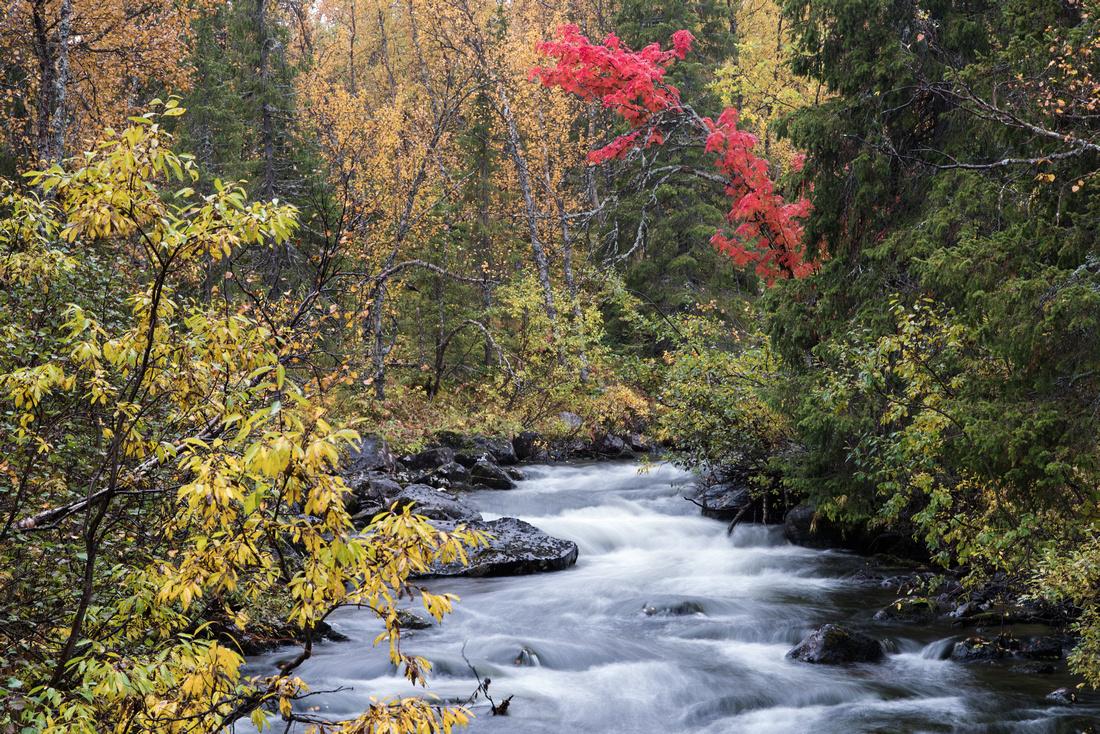 Arctic Sweden in Autumn